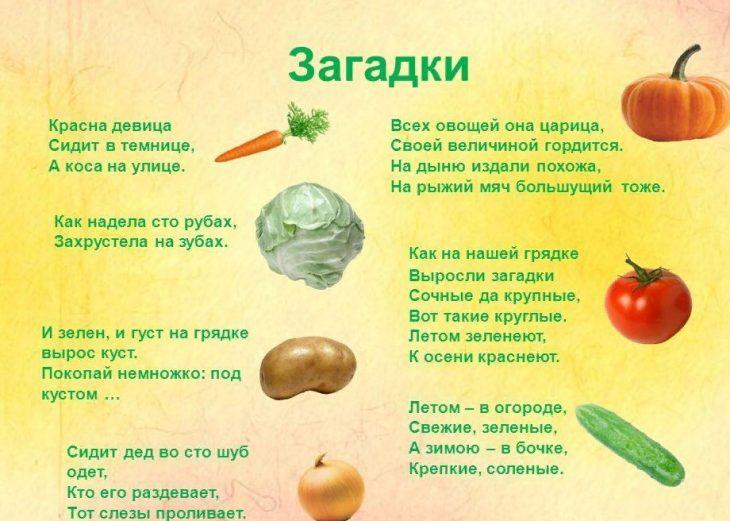 Загадки в картинках про овощи