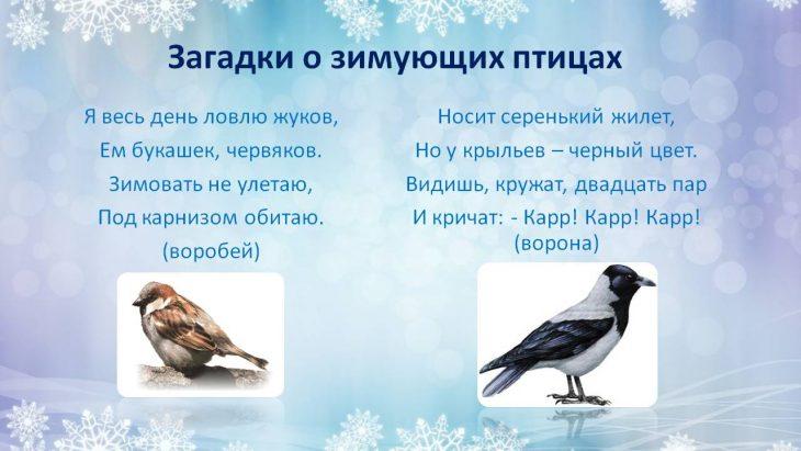 разнообразные загадки с картинками про птиц лачетти хэтчбек