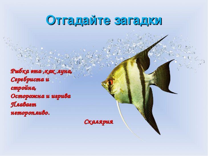 загадки в картинках про рыб акрилатная грунтовочная