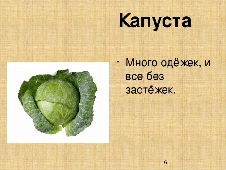 Стихи про капусту смешные